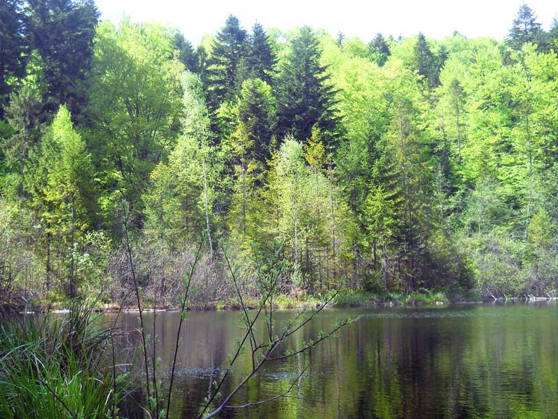 Озеро в урочище Журавлиное.